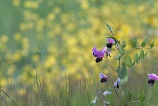 Piante e Fiori - Plants and Flowers