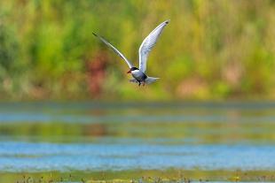 Uccelli - Birds