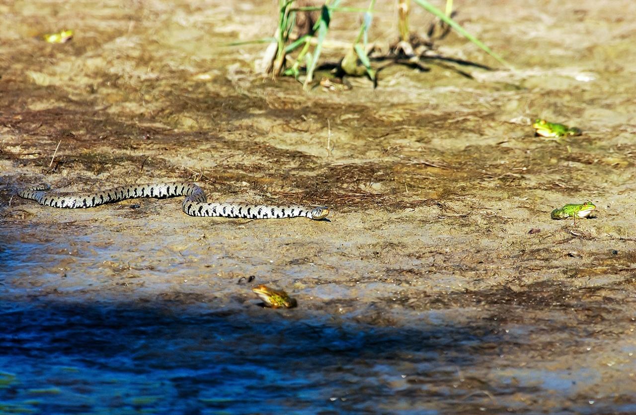 Rettili e Anfibi - Reptiles and Amphibians